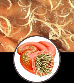 Parazitol - състав
